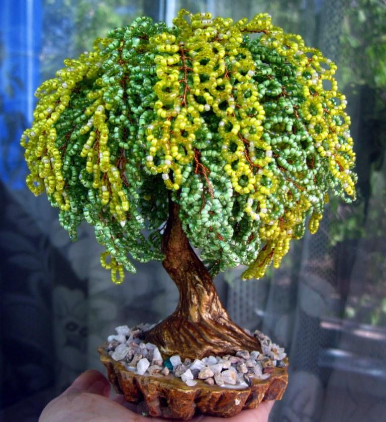 До недавнего времени я и знать не знала, что есть такое замечательное дерево - Бобовник, или Золотой дождь.